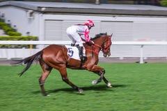 Einzelnes Pferd geritten vom Jockey Nachtpferderennenwettbewerb an der Rennbahn Unscharfe Bewegung, horizontales Bild lizenzfreies stockbild