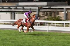 Einzelnes Pferd geritten vom Jockey Nachtpferderennenwettbewerb an der Rennbahn Unscharfe Bewegung, horizontales Bild lizenzfreie stockfotografie