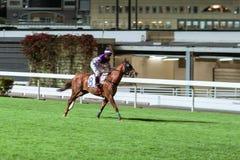 Einzelnes Pferd geritten vom Jockey Nachtpferderennenwettbewerb an der Rennbahn Unscharfe Bewegung, horizontales Bild lizenzfreies stockfoto