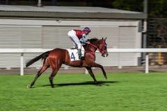 Einzelnes Pferd geritten vom Jockey Nachtpferderennenwettbewerb an der Rennbahn Unscharfe Bewegung, horizontales Bild lizenzfreie stockfotos