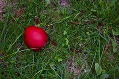 Einzelnes rotes Apple, das auf rauem Gras im Herbst - Bild liegt lizenzfreie stockbilder