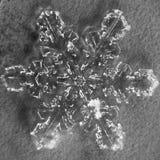 Einzelnes Schneeflocken-Makro Stockbilder