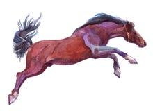 Einzelnes Tier des Aquarells Pferdelokalisiert auf einem Weiß vektor abbildung