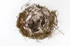 Einzelnes Vogelnest Lizenzfreies Stockfoto
