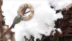 einziehende wilde Vögel im Winter stock video