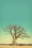Einzig entblößen Sie verzweigten Winter-Baum im Land lizenzfreie stockbilder