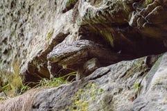 Einzigartig geformte Felsformationen lizenzfreies stockfoto