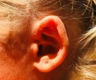 Einzigartiges Ohr stockfoto