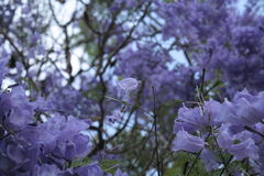 Einzigartigkeit in den Blumen Lizenzfreies Stockbild