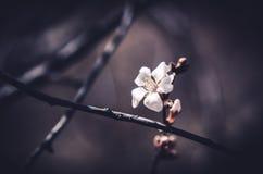 Einzige Blüte Stockfotos