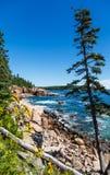 Einzige Kiefer im Acadia-Wald Lizenzfreie Stockbilder