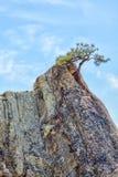 Einzige Kiefer im Sandstein-Berggipfel Lizenzfreie Stockfotos