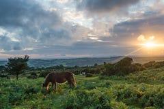 Einzige Stute bei Sonnenuntergang Lizenzfreie Stockfotos