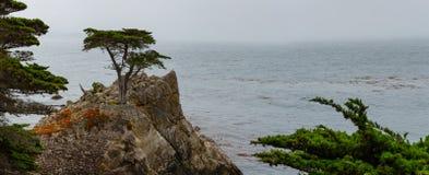 Einzige Zypresse bei Monterey Lizenzfreies Stockbild