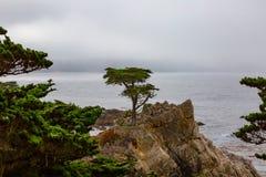Einzige Zypresse bei Monterey Stockbilder