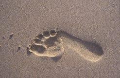 Einziger Abdruck im Sand Lizenzfreie Stockfotografie