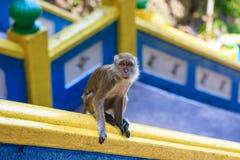 Einziger Affe auf Treppe Lizenzfreie Stockbilder