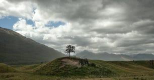 Einziger Baum Stockfotos