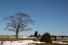 Einziger Baum lizenzfreie stockbilder