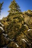 Einziger Baum Stockbild