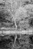 Einziger Baum Lizenzfreies Stockbild