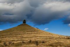Einziger Baum auf Bergkuppe, Ackerland, Neuseeland Stockfotos