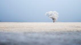 Einziger Baum auf breitem Feld im Winter auf einem eisigen Morgen Stockbild
