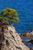 Einziger Baum auf Costa Brava Cliff in Spanien Stockfotos