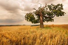 Einziger Baum auf einem Gebiet Stockfotografie