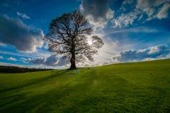 Einziger Baum auf einem Gebiet hintergrundbeleuchtet durch die Sonne stockfoto