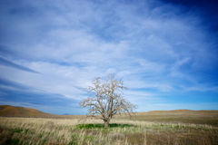 Einziger Baum auf Grasland Stockfotografie