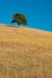 Einziger Baum auf Grasland Lizenzfreie Stockbilder