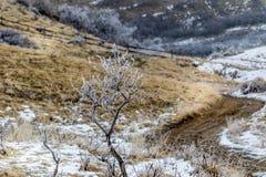 Einziger Baum bedeckt im Frost im Winter lizenzfreie stockfotos
