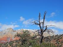Einziger Baum-Begleiter lizenzfreies stockbild