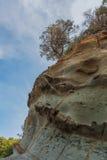 Einziger Baum, der auf einem schönen Felsen wächst Stockfoto