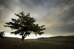 Einziger Baum in der hohen Bergwiese Stockbild