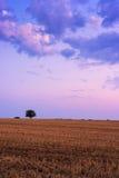 Einziger Baum, der im Sommer steht Lizenzfreie Stockfotos