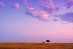 Einziger Baum, der im Sommer steht Lizenzfreies Stockfoto