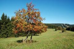 Einziger Baum in der Landschaft Lizenzfreies Stockfoto
