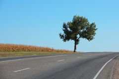 Einziger Baum durch die Landstraße gegen blauen Himmel Stockfotografie