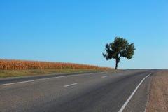 Einziger Baum durch die Landstraße gegen blauen Himmel Stockbild