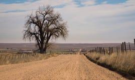 Einziger Baum durch Schotterweg stockfoto