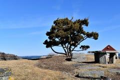 Einziger Baum am Farbstoff Cove auf felsigem Kap Elizabeth, Cumberland County, Maine, Neu-England US lizenzfreies stockfoto