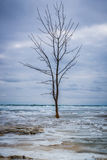 Einziger Baum in gefrorener Brandung lizenzfreie stockfotografie