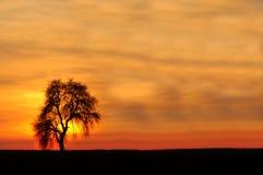 Einziger Baum gegen die untergehende Sonne Stockfotografie