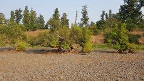 Einziger Baum gewachsen in den Steinen Lizenzfreie Stockfotografie