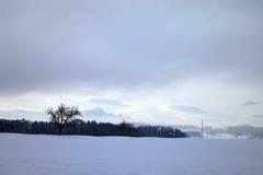 Einziger Baum mit Vogel im Schnee Stockfotos