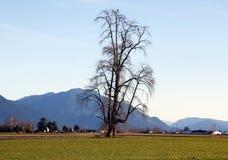 Einziger Baum mit zwei Eagles Stockbilder
