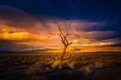 Einziger Baum am Sonnenuntergang-Pyramid See Lizenzfreie Stockfotos