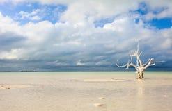 Einziger Baum am Strand Stockfotos